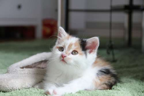 Cat Kitten Cat Baby Playful Small Young Animal
