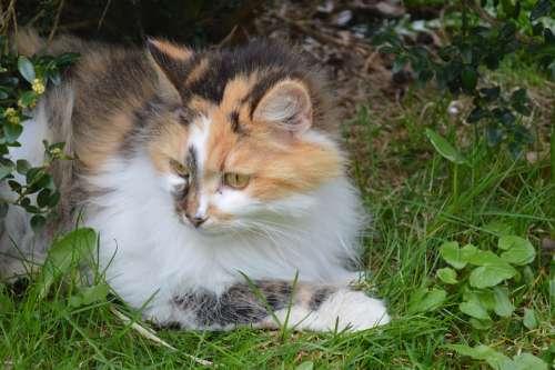 Cat Animal Garden Pet