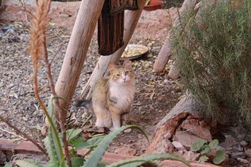 Cat Animal Pet Kitten Cute Kitty Adorable