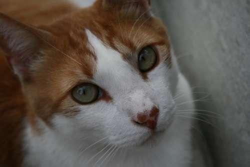 Cat Kitten Cute Feline Pets Kitty Animals Sweet