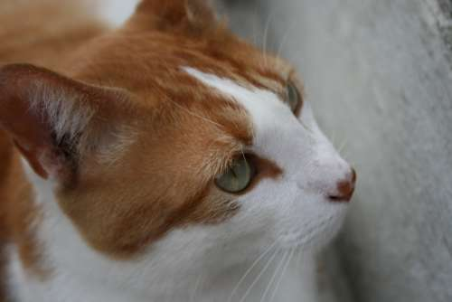 Cat Kitty Animals Pet Feline Kitten Adorable
