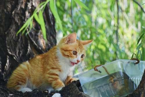 Cat Kitten Tree Green Natural Leaf Summer