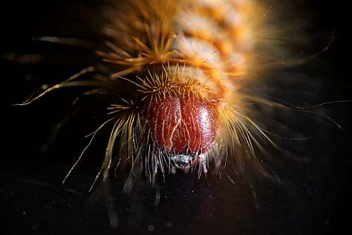 Caterpillar Caterpillar Hairy Nature Butterfly