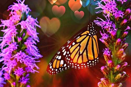 Clarity Butterfly Summer Orange Garden Wings