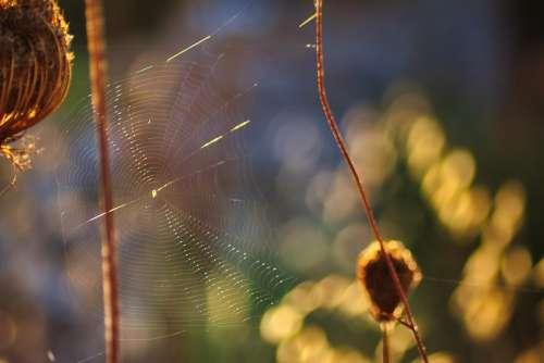 Cobweb Nature Plant Sunbeam