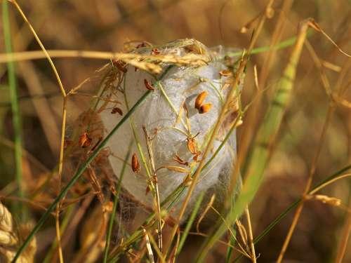 Cocoon Hatching Caterpillar Nature Nest Web