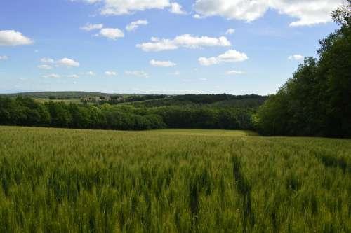 Cornfield Landscape Nature Summer Field Cereals