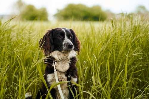 Dog Field Green Animal Nature Pet Grass