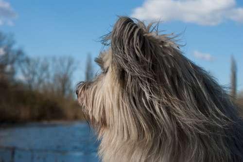 Dog Fur Pet Snout View Profile Attention