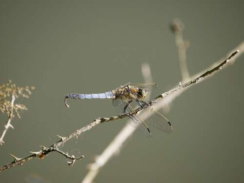 Dragonfly Nature Insect Pond Close Up
