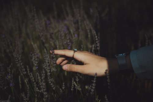 El Nature Lavender Hands People Woman Girl Young