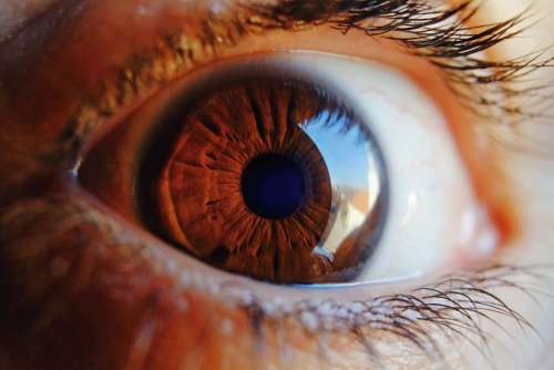 Eye Macro Vision Human Iris Woman Look Pupil