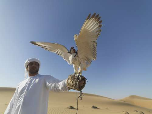 Falcon Uae Desert Hunter Claws Falconry Feathers
