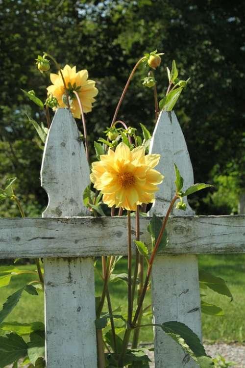 Fence Flowers Garden