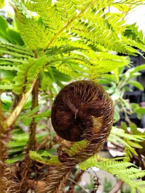 Fern Nature Green Leaf