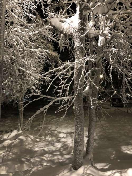 Finnish Lapland Winter