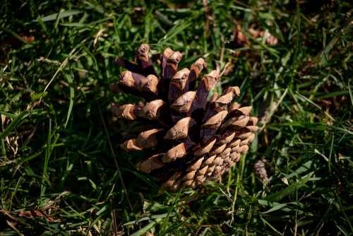 Fir Apple Grass Garden Nature Autumn Summer Tree