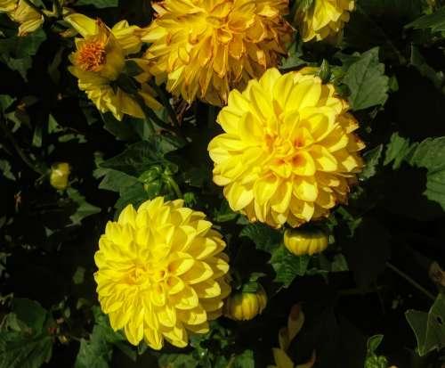 Flora Flowers Yellow Nature Garden