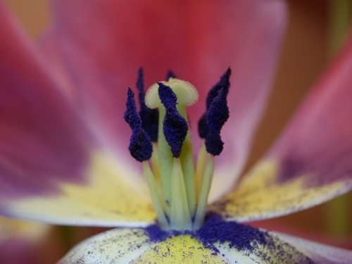 Flower Plant Blossom Bloom Close Up