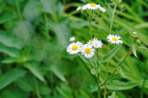 Flower Spring Summer Beauty Nature Desktop