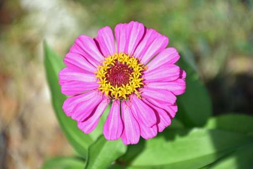 Flower Floral Spring Botany Plant Flora Pink