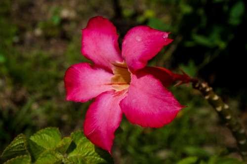 Flower Red Bloom Blossom Nature Plant Garden