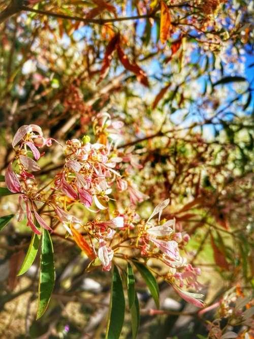 Flower Summer Nature Plants