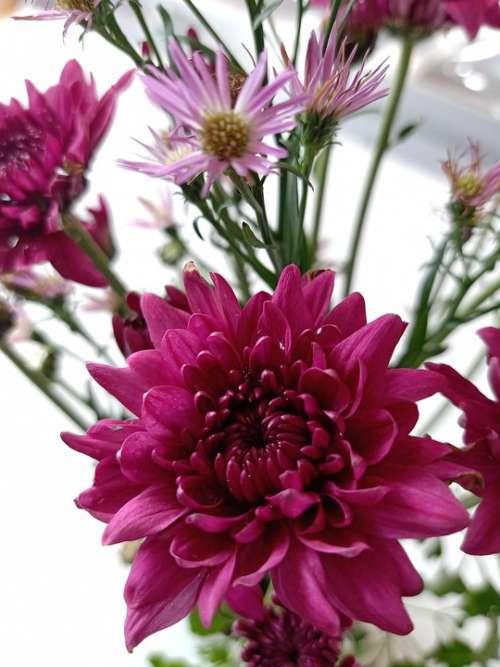 Flower Pink Spring Blossom Summer Flora Tender
