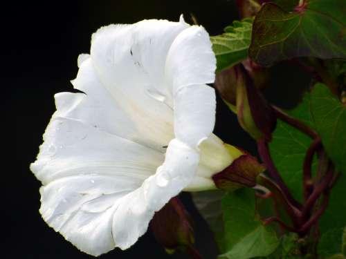Flower Wild Summer Petals White Nature Botany