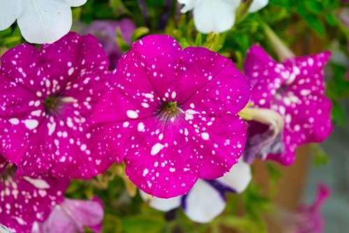 Flower Garden Close Up Petals