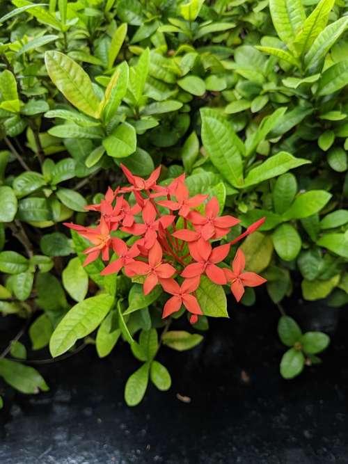 Flower Plants Lush