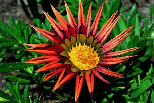 Flower Colored Summer The Petals Beauty Nature