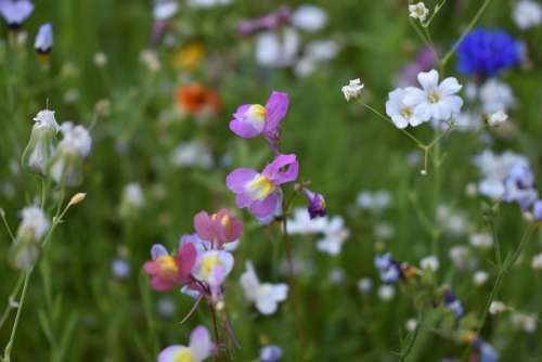 Flower Meadow Summer Close Up Garden Flowers