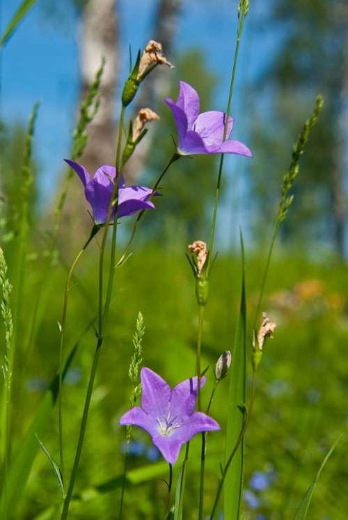 Flowers Summer Plant Flora Color