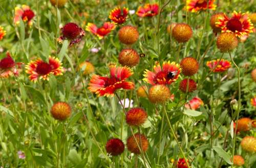 Flowers Red Flowers Bumblebee Nature Summer Plant