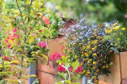 Flowers Boxes Garden Flourishing Summer Season