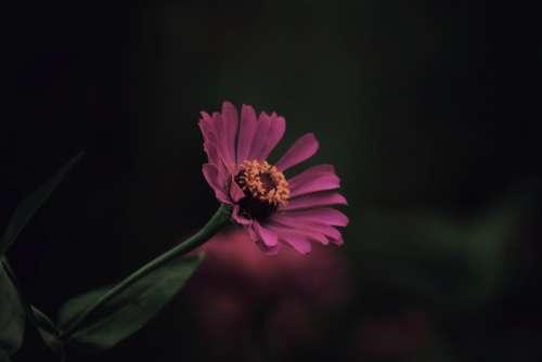 Flowers Nature Plant Flora Colour Photography