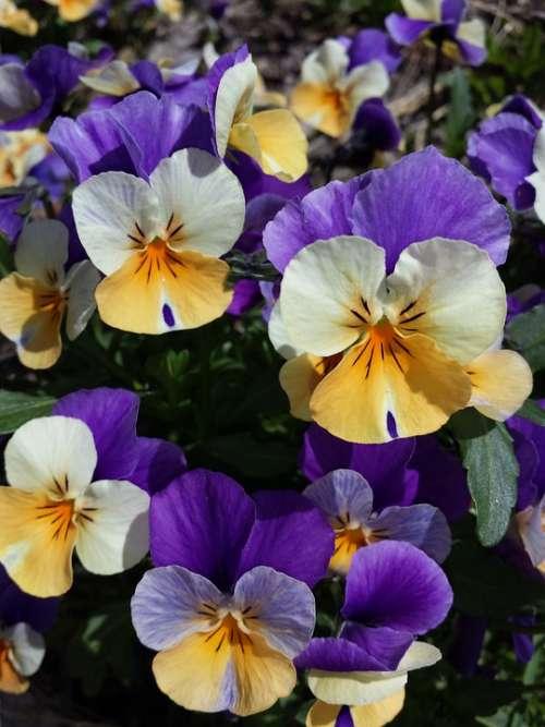 Flowers Spring Plant Bloom Purple Blossom