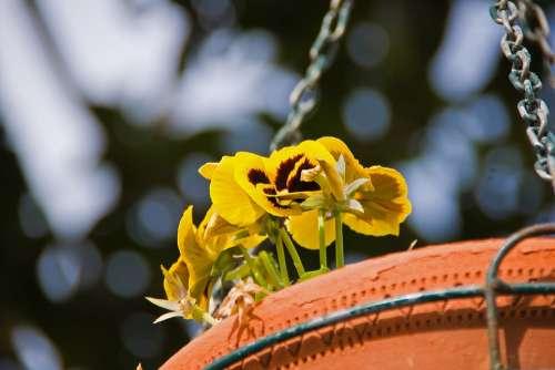 Flowers Vase Detail