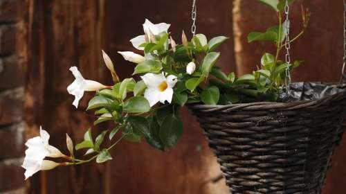 Flowers Basket Summer Romantic