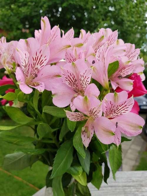 Flowers Pink Summer Bouquet