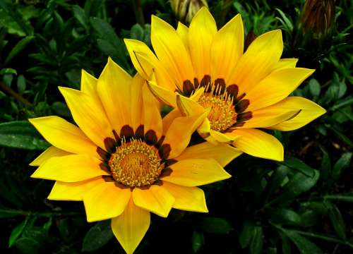 Flowers Yellow Summer Nature Garden Beautiful