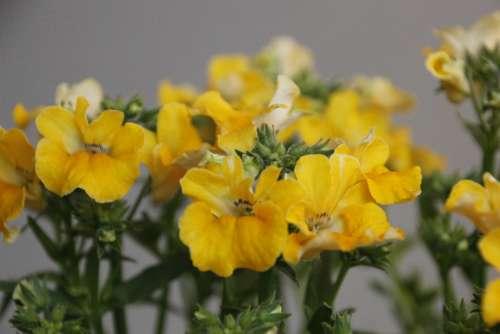 Flowers Yellow Summer Blossom Bloom Garden
