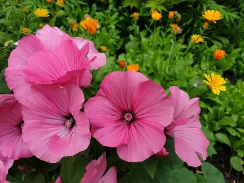 Flowers Nature Bloom Garden Spring Colorful Bed