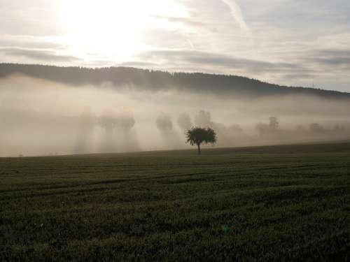 Fog Tree Landscape Shadow Forest Autumn Nature
