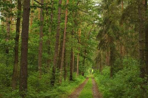 Forest Green Light Nature Landscape Tree Foliage