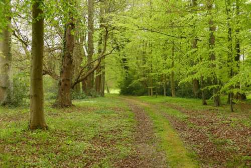 Forest Tree Green Path Landscape Nature Hiking