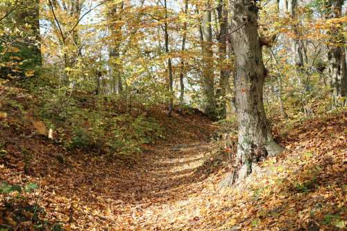 Forest Autumn Leaves Nature Trees Landscape Path