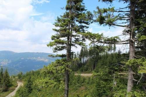 Forest Coniferous Forest Silesian Beskid Skrzyczne