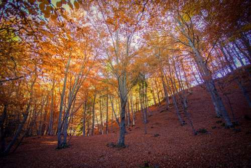 Forest Leaves Elberi Autumn Colors Light Tree